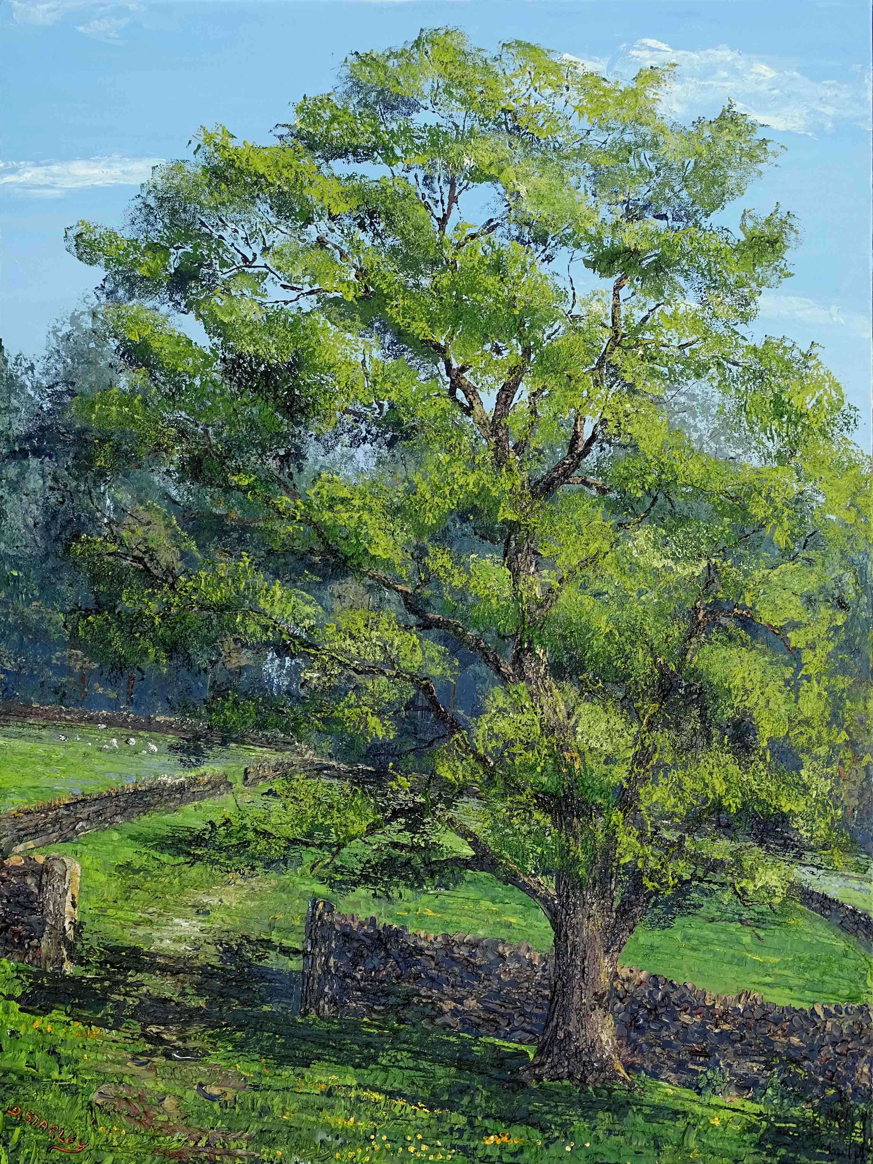 ds608-Ash-Tree-Wharfedale-30x40in-2021-MR-1